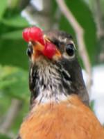 Birds of the Garden Img_5710