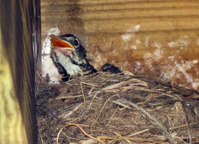 Birds of the Garden Img_5711