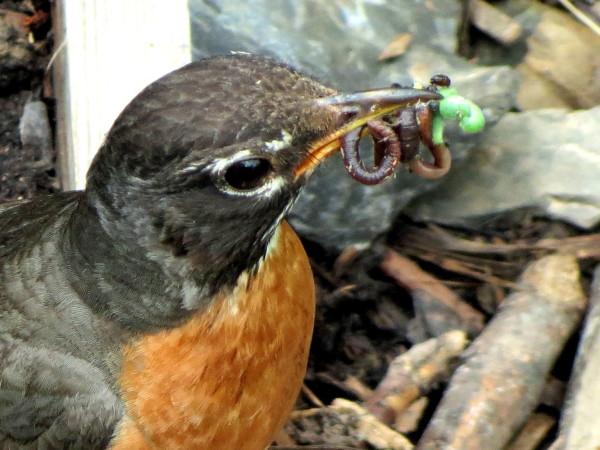 Birds of the Garden Img_5811