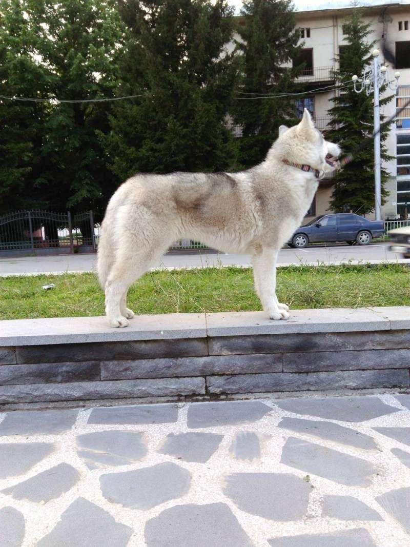 Husky size 13405510