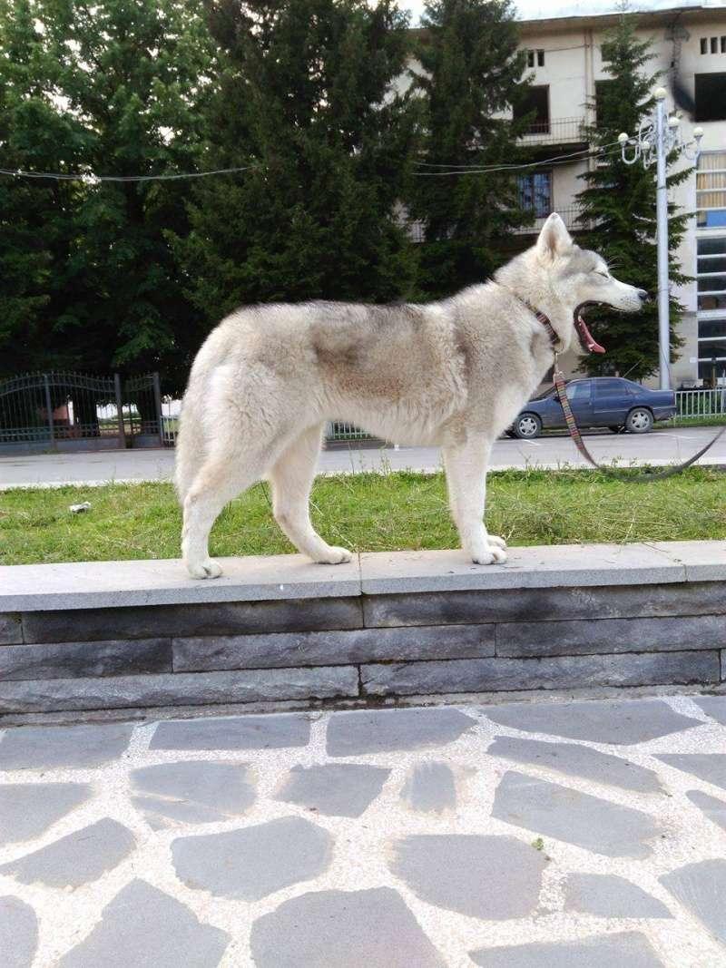 Husky size 13405610