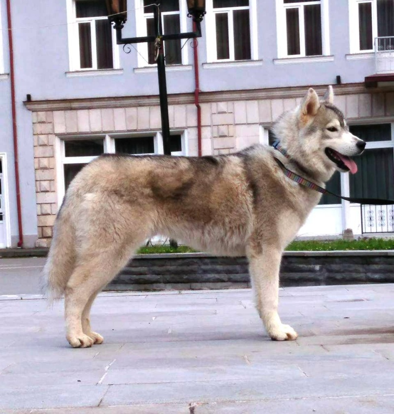 Husky size 13410310