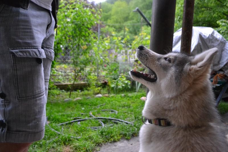 Husky size Img_0810