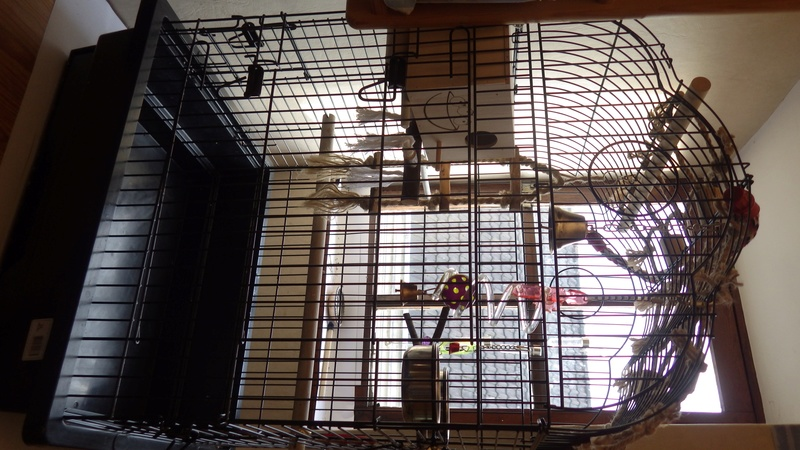 Cage a vendre  Rimg2415