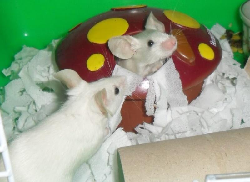 My heart mice... Dp10