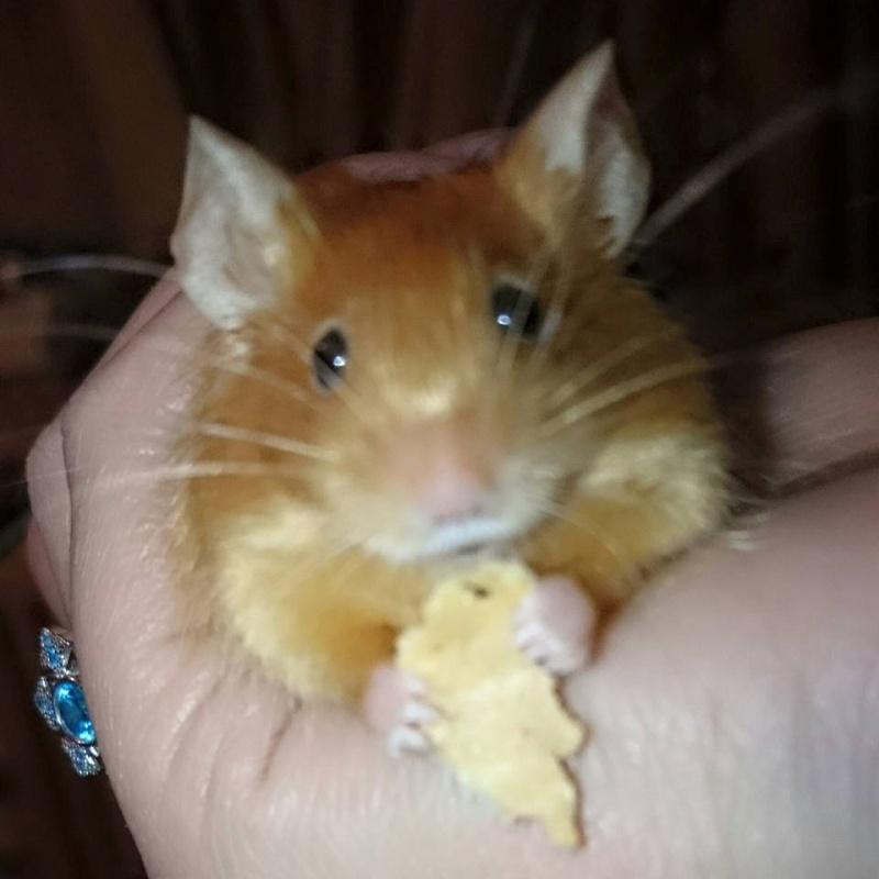My heart mice... Ginger10