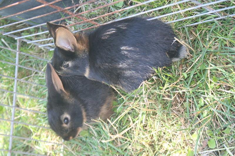 Bébé lapins Img_3110