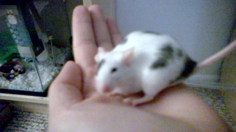 My heart mice... Wp_20139