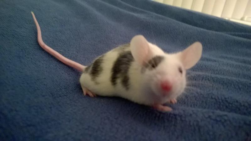My heart mice... Wp_20142