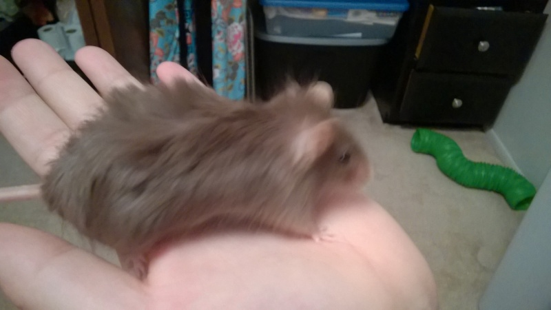 she's got so much fur! Wp_20144