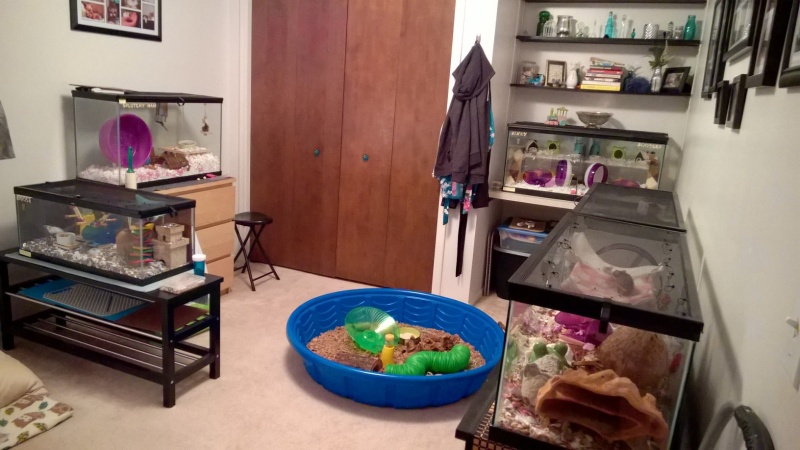 behold, the critter room Wp_20208