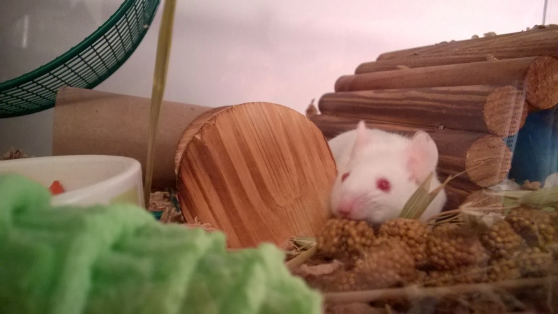 My little foster mouse (who I'll probably keep) - Page 2 Wp_20213