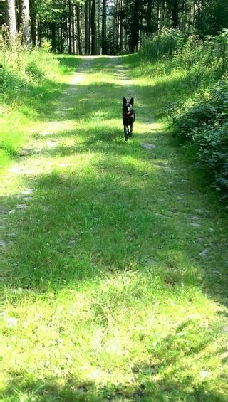 POUPI, chiot femelle, née en décembre 2015 (Pascani)-REMEMBER ME LAND - adoptée par Ludivine (Belgique) - Page 3 14151810