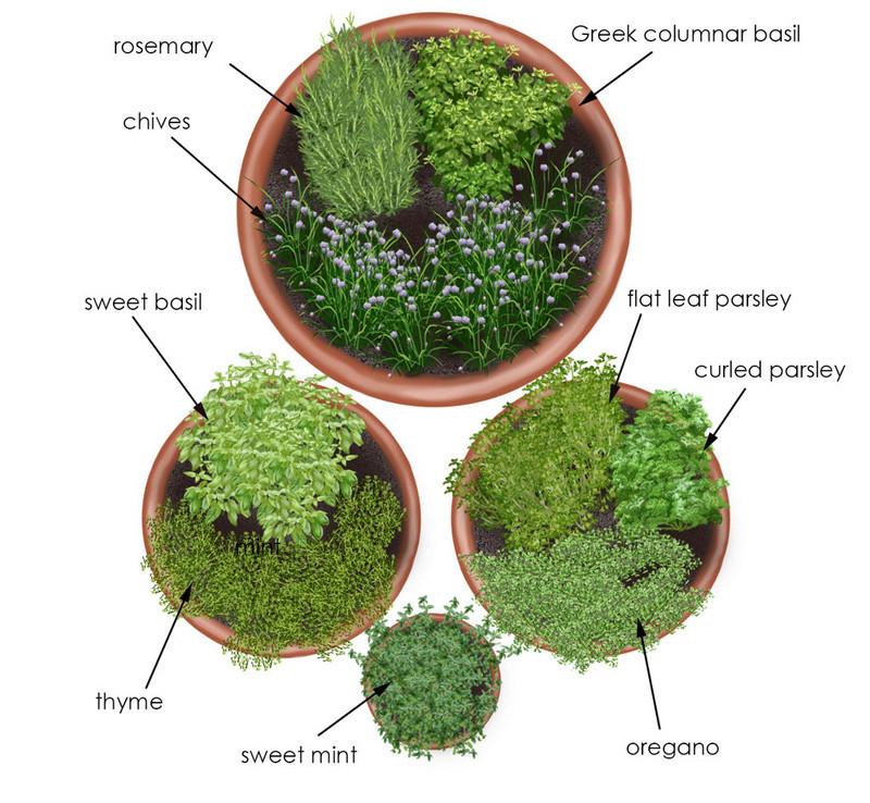 Making Your Herb Garden Herb-g10