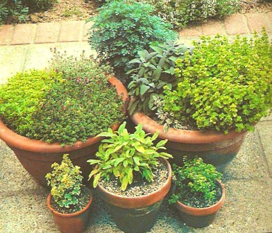 Making Your Herb Garden Potted10