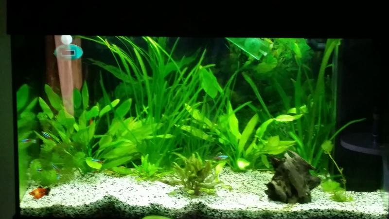 mon premier aquarium juwel rio 125 20160810