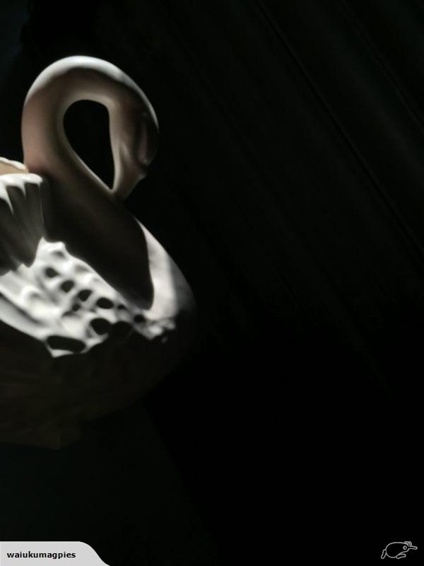 Beautiful Swan song… # 170  50712514