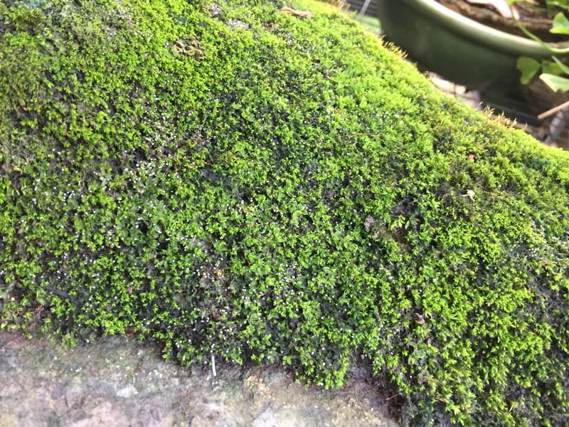Moss is dying!! Img_1212