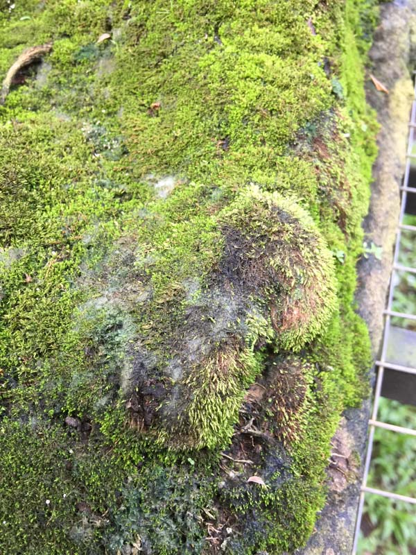 Moss is dying!! Img_1214