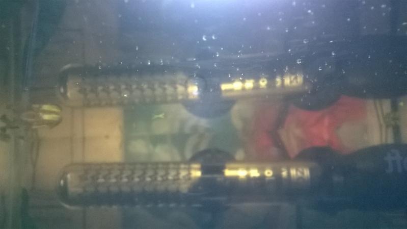 il ya des truc bizzare dans mon aquarium Wp_20111
