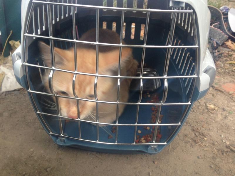 Camp de Roms de Montaudran démantelé : 50 chats sortis de l'enfer Img_4313
