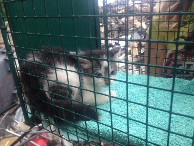 Camp de Roms de Montaudran démantelé : 50 chats sortis de l'enfer Img_4317