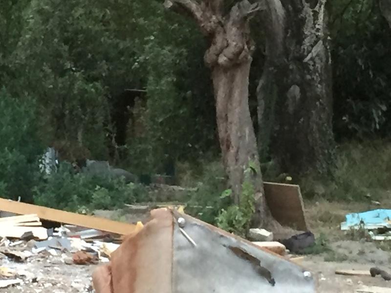 Camp de Roms de Montaudran démantelé : 50 chats sortis de l'enfer Img_9617
