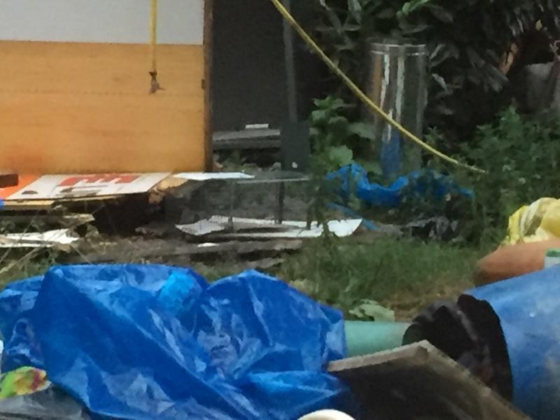 Camp de Roms de Montaudran démantelé : 50 chats sortis de l'enfer Img_9618