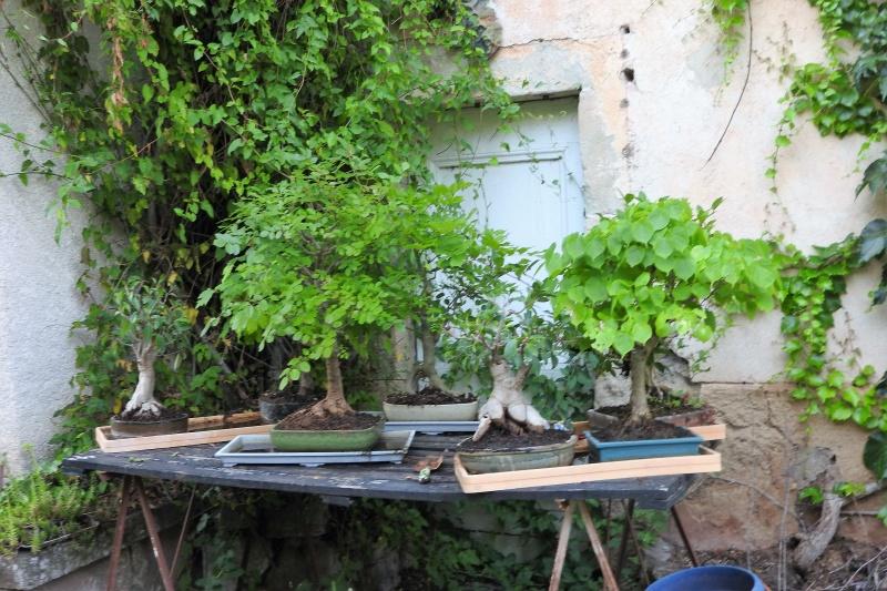 Une balade en sud Aveyron Dscn3349