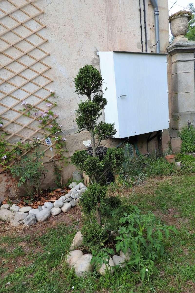 Une balade en sud Aveyron Dscn3351