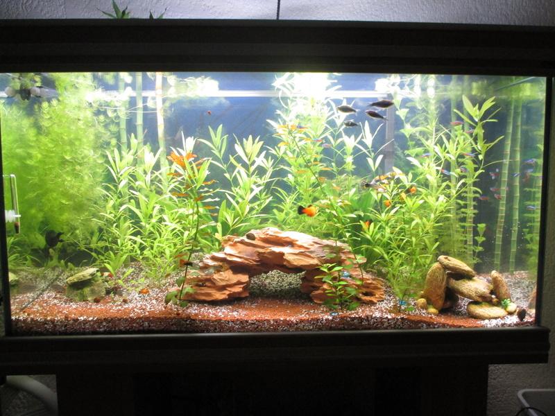 évolution de cet aquarium Img_2612
