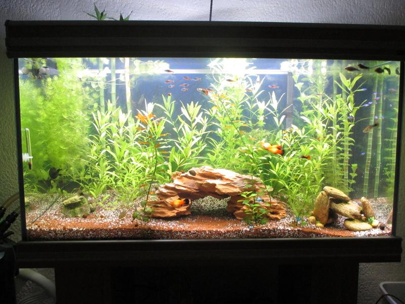 évolution de cet aquarium Img_2613