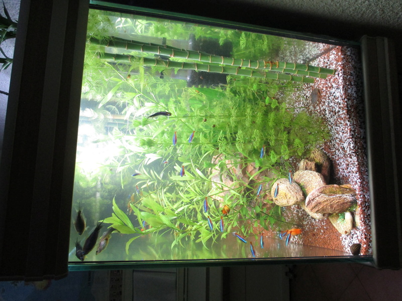 évolution de cet aquarium Img_2614