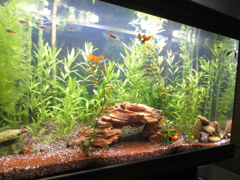 évolution de cet aquarium Img_2615