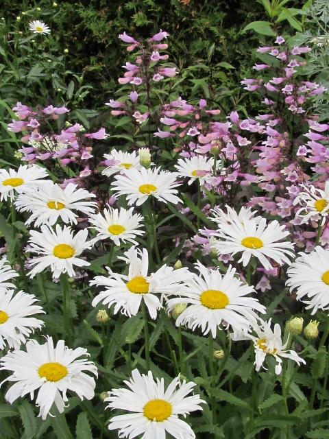 Guide d'identification: jeunes pousses, feuillages et fleurs - Page 3 Margue10