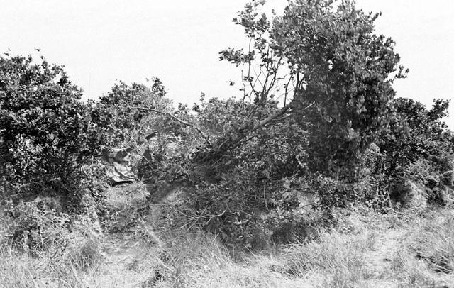 Bataille dans le Bocage Normand - techniques et tactiques Image92