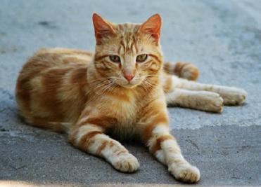 Sunlitcastiel's Kitties Aspen_10