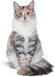 Sunlitcastiel's Kitties Fawn_214