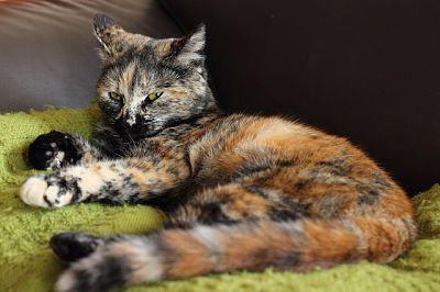 Sunlitcastiel's Kitties Little10