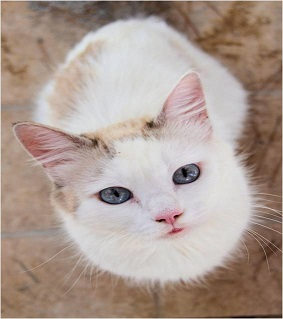 Sunlitcastiel's Kitties Pictur12