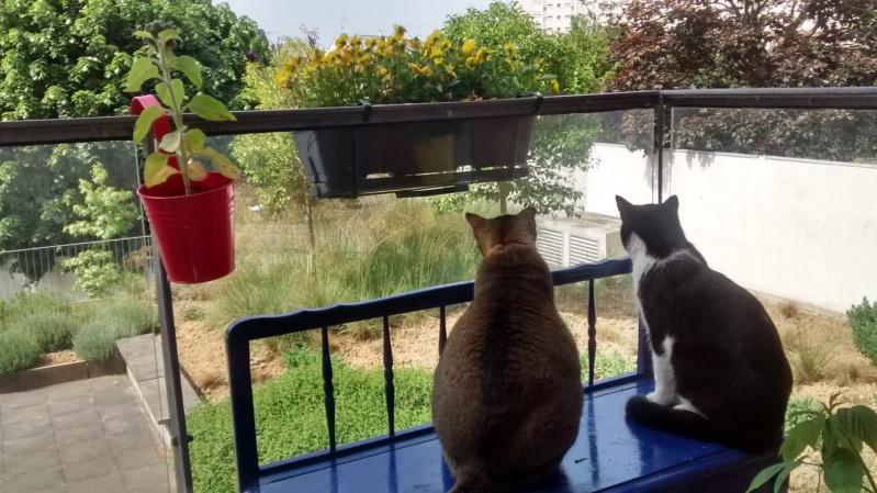KIT-KAT chat noir et blanc 1 an FIV+ (ADPK 35) Img_2023