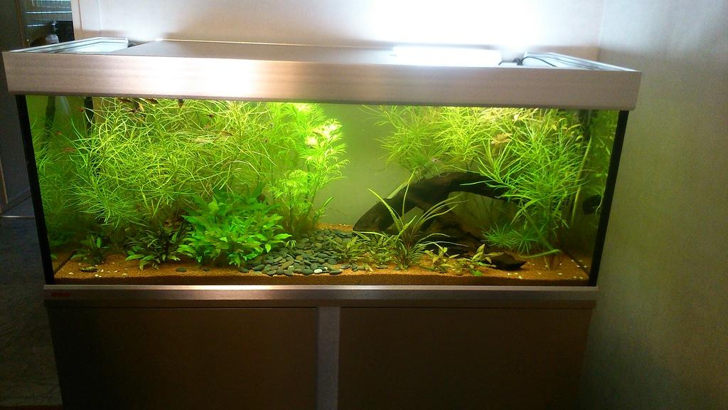 Carences de plantes : lesquelles, et quels remèdes éventuels Dsc_1312