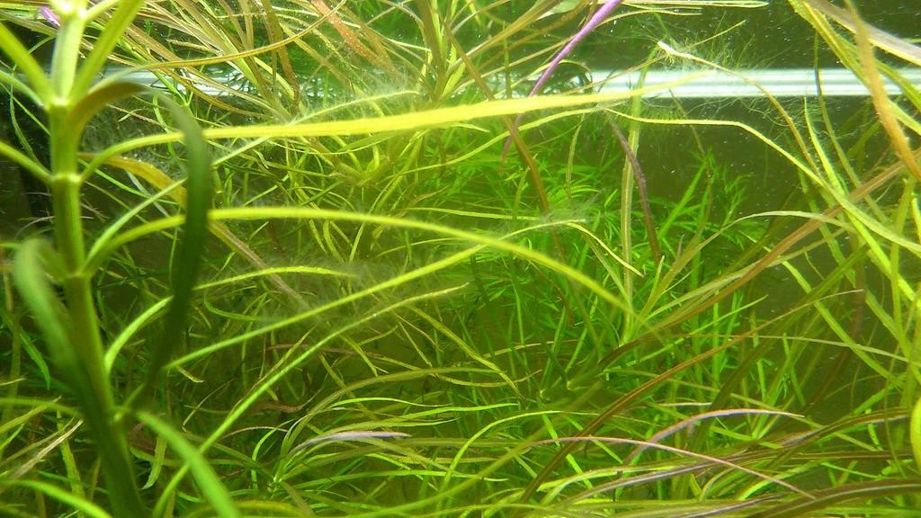 Carences de plantes : lesquelles, et quels remèdes éventuels Dsc_1315