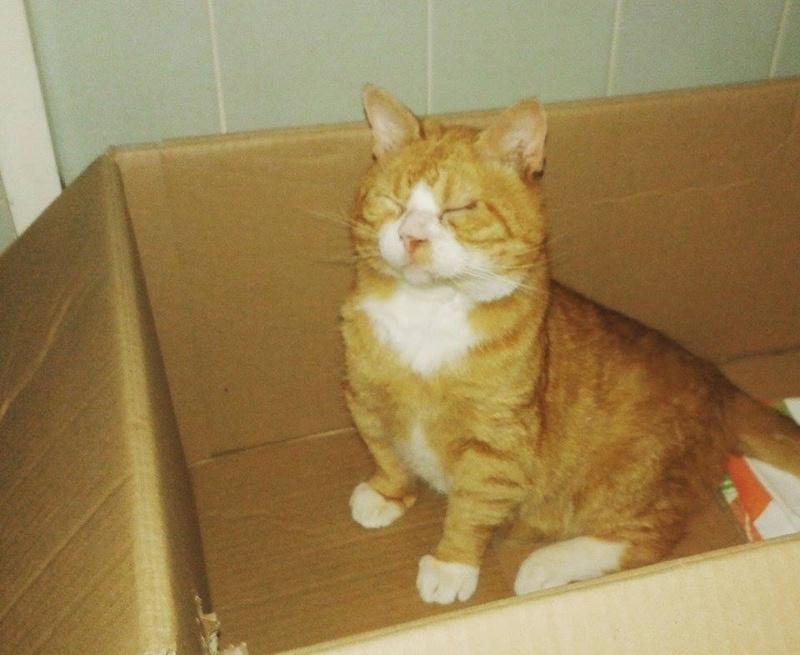 Garfield, après 1 mois à la maison !  13487810