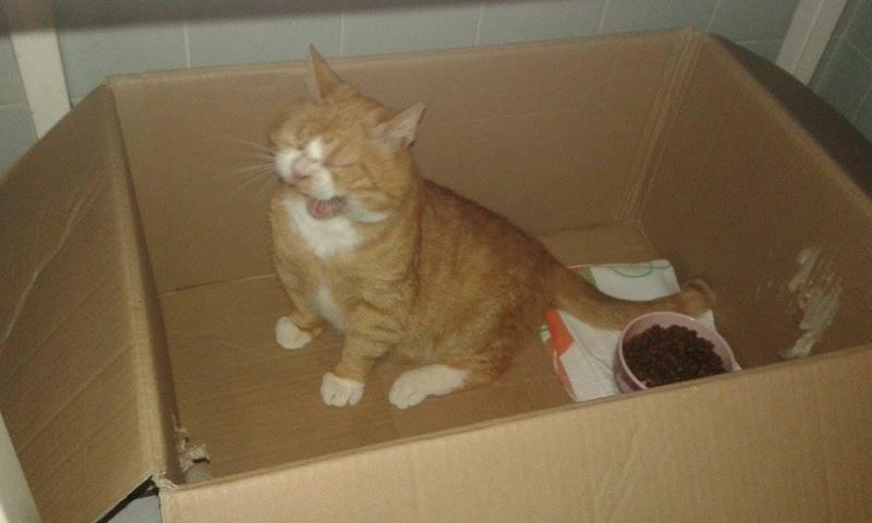 Garfield, après 1 mois à la maison !  13514210