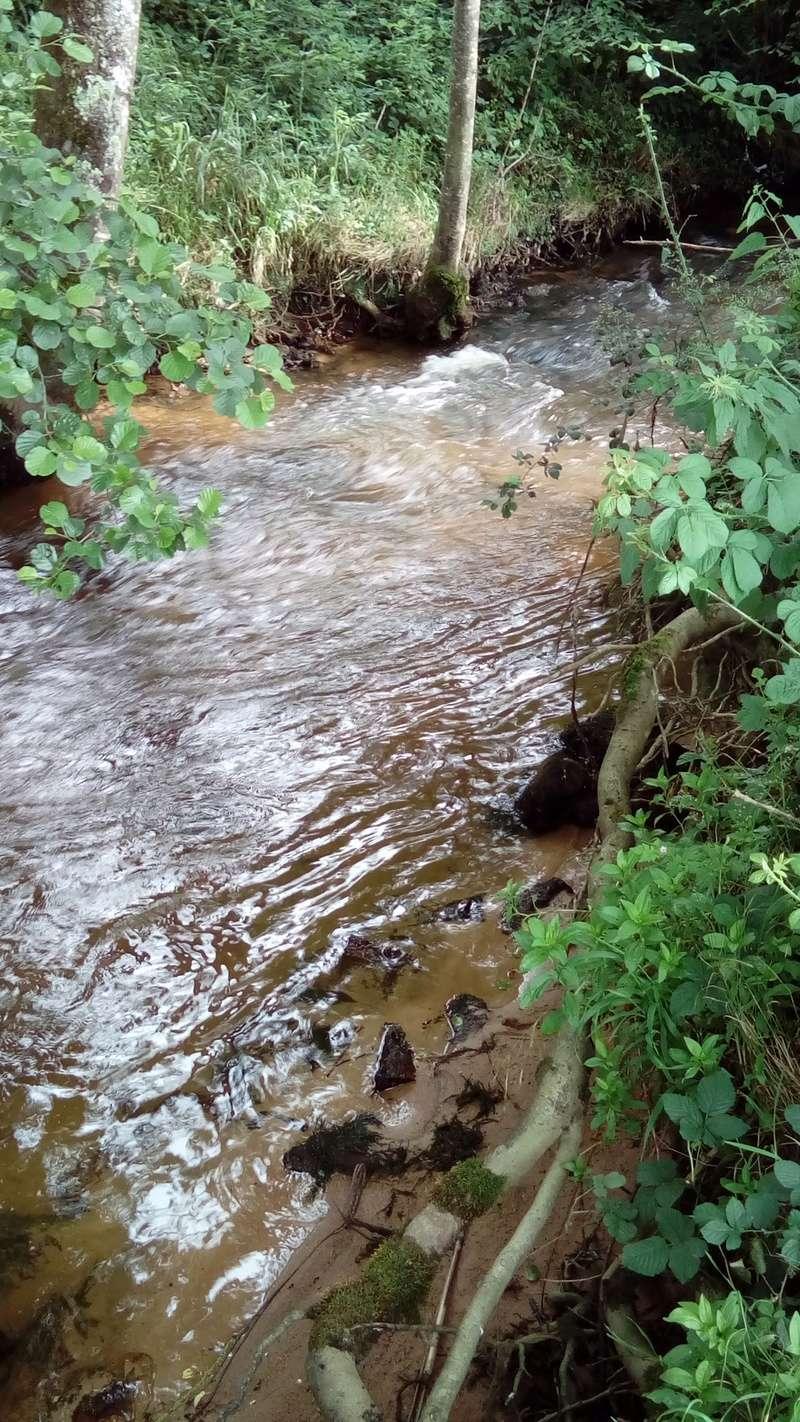 ruisseau - Petit ruisseau du MORVAN Dsc_0013