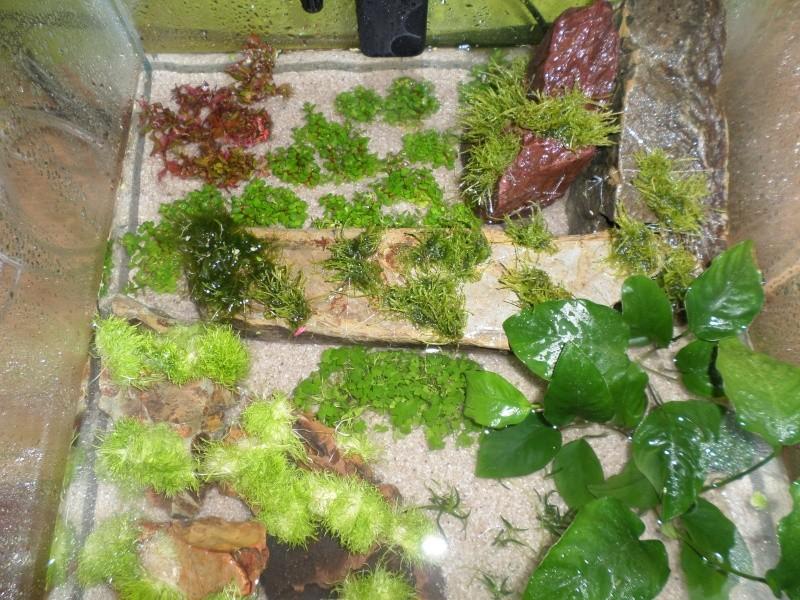 aquarium nano pour crevette Sam_2516
