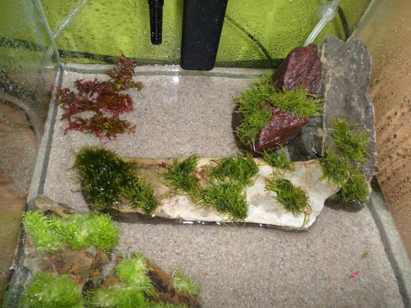aquarium nano pour crevette Sam_2518
