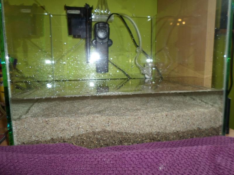 aquarium nano pour crevette Sam_2519