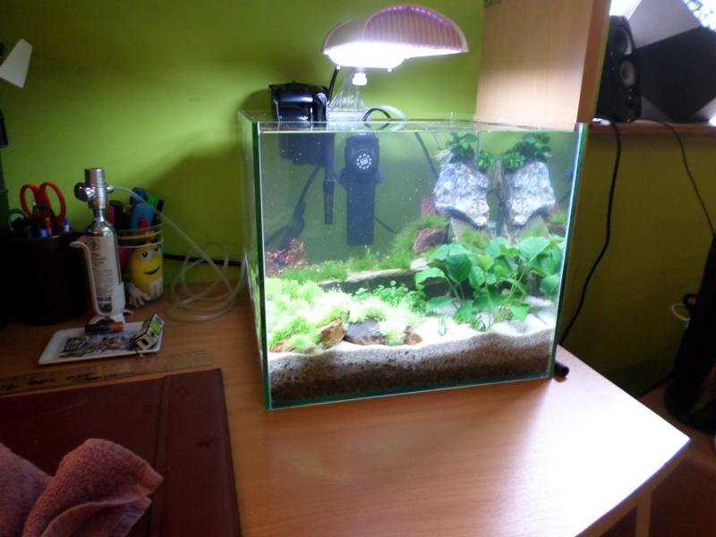 aquarium nano pour crevette Sam_2612